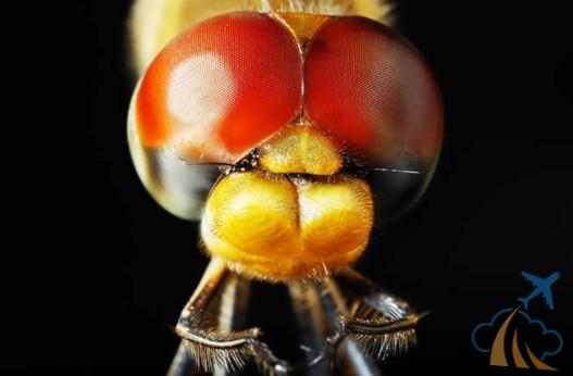 Любопытный груз: 20 странных вещей, которые летят вместе с вами